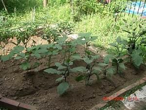 July | 2008 | Japanese Garden
