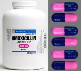 how much amoxicillin for cats can dogs amoxicillin dr mahaney