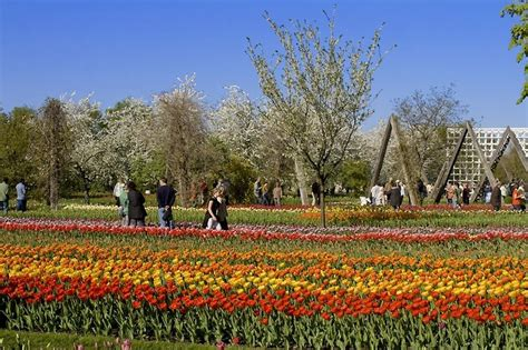 Britzer Garten Berlin Spielplatz by Tulpenschau Quot Tulipan Quot Berlin Av Berichte Fotos Und