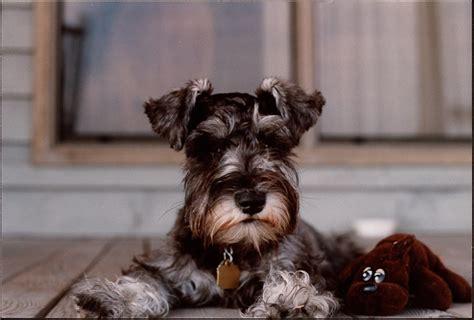 images   maddies pet adoption days