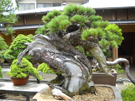 japanese garden bonsai daily glimpses of japan bonsai garden omiya saitama