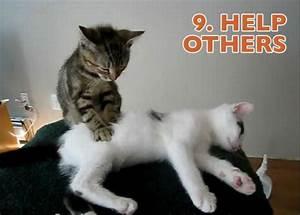 Job Goals Cats Illustrate New Years Resolutions 10 Pics