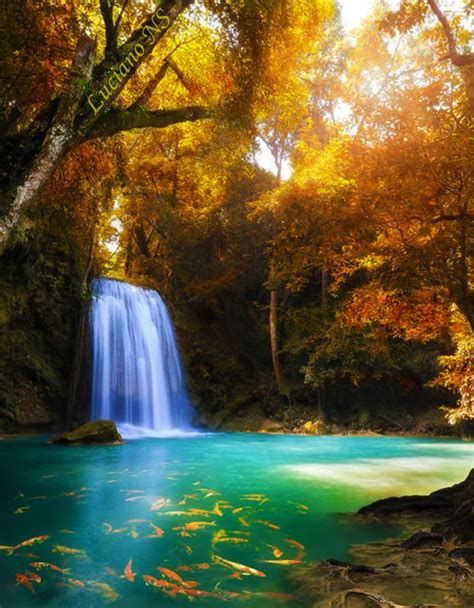 erawan national park thailand falls fish lake water spring winter summer tree yellow