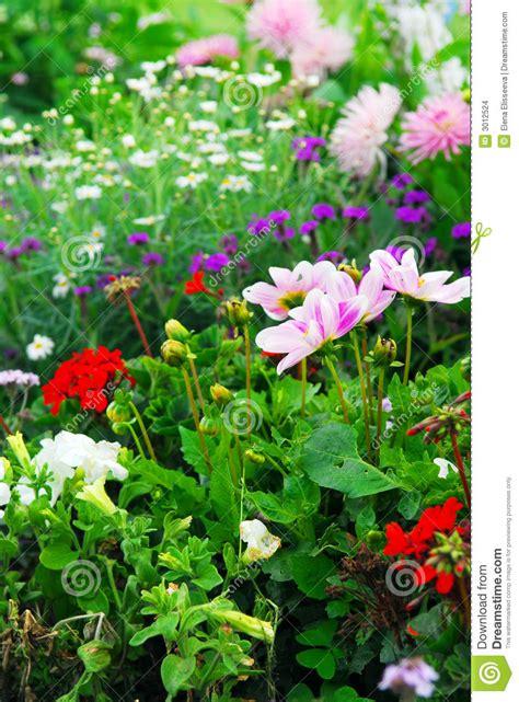giardini versailles giardini di versailles fotografia stock immagine di base