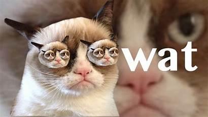 Grumpy Cat Wallpapers Meme Desktop Quotes Second