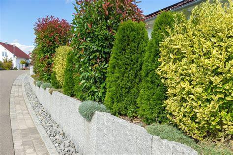 Die Hecke Natuerlicher Zaun Und Sichtschutz by Attraktive Grenzen Ziehen Mit Z 228 Unen Mauern Und Hecken