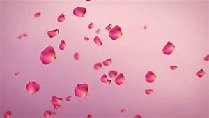 Rose Petals Falling From Sky (Loop). Seamlessly Loopable ...