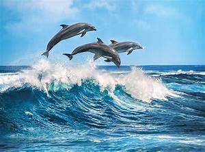 Schöne Delfin Bilder : delfine 500 teile clementoni puzzle online kaufen ~ Frokenaadalensverden.com Haus und Dekorationen