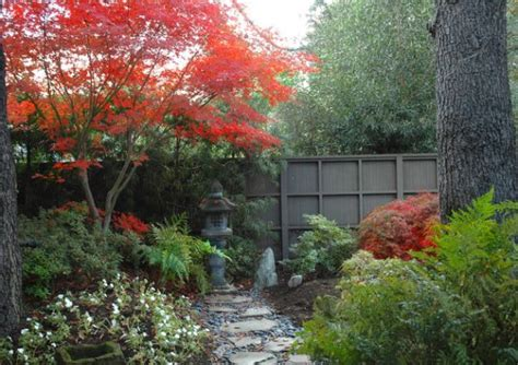Japanese Maple Garden Design Ideas