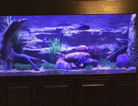 210 Gallons Fish Tanks And Aquariums