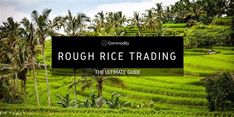 Rough Rice: Learn How To Trade It at Commodity.com