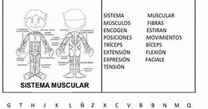 Fichas De Primaria  Ficha Del Sistema Muscular
