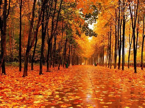 Autumn Tree Leaf Fall Animated Wallpaper - fall pictures for wallpapers wallpaper cave