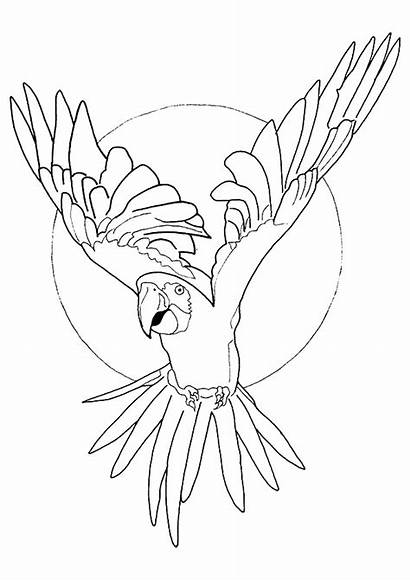 Macaw Coloring Pages Printable Books