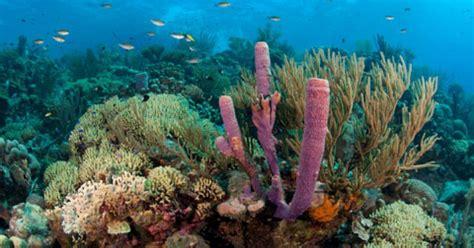 bonaire   healthy coral reef   caribbean