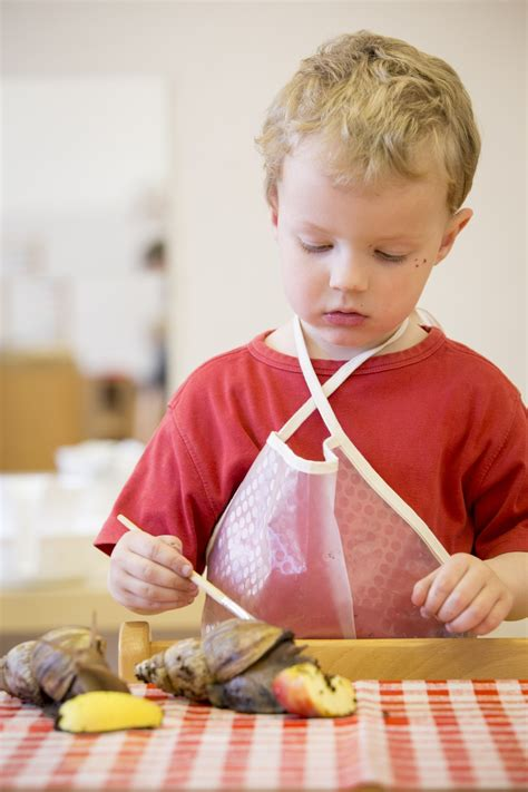 About AMI | Montessori Education for Social Change