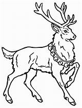 Deer Coloring Pages Coloringpages1001 Drawing Christmas Reindeer Print Colored Renne Colorier Animals Rudolph Un sketch template