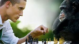 Humans Not That Much Better Than Fellow Primates At Game