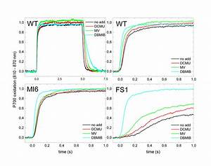 7 P700 Oxidation And P700   Reduction In The Presence Of