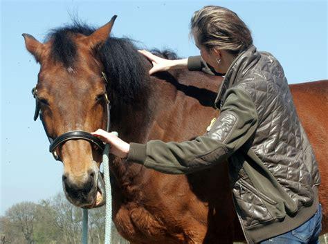 Sitemap  Paardensportmassage Noordnederland, Een Soepel