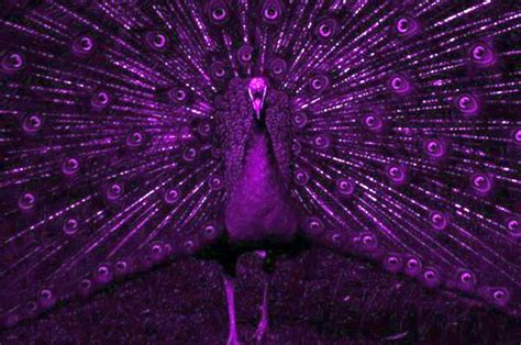 do birds see color birds see in ultraviolet light in addition to color so