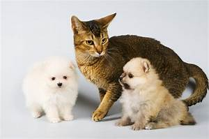 How to Calm a Cat Anxious Because of the New Dog - Pets