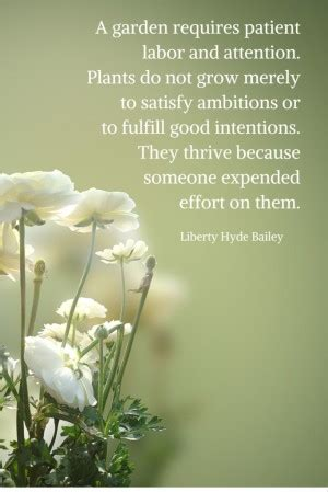 liberty hyde bailey quotes quotesgram