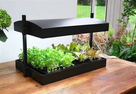 Indoor Growing Plants