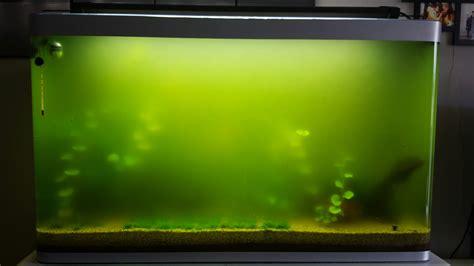 efficatit 233 du st 233 rilisateur uv contre l eau verte