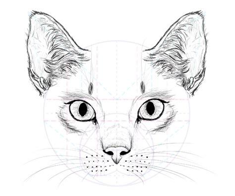 draw animals cats   anatomy