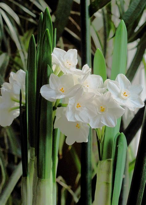 how to paperwhites hgtv