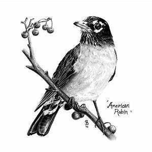Pencil Drawings — Sean Blackford Art