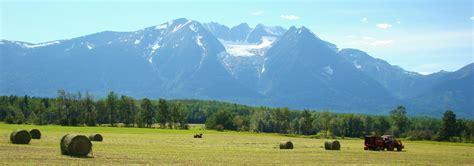 Tree-planters borrowing B.C.'s protected farmland, selling ...