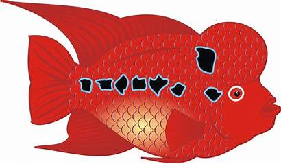 Fish Flowerhorn Clipart Svg