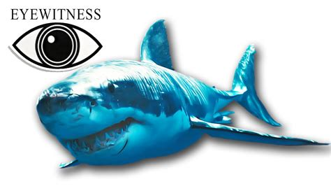 EYEWITNESS | Shark | S1E12 - YouTube