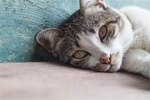 Piege A Rat Castorama : piege a chat fait maison ventana blog ~ Voncanada.com Idées de Décoration