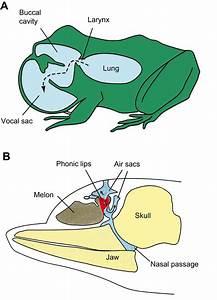Acoustic Communication In Terrestrial And Aquatic Vertebrates