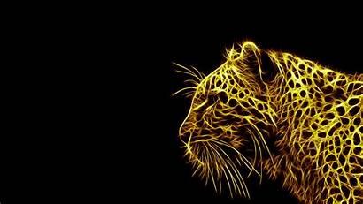Lion Wallpapers Leopard Animals Cheetah Hintergrundbilder Leopards