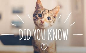 111 Did You Know Facts for Veterinary Practices