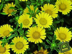 Pilea Pflanze Kaufen : sommerblumen ~ Michelbontemps.com Haus und Dekorationen