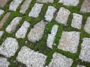 Moos Auf Gartenplatten Entfernen : moos entfernen ~ Michelbontemps.com Haus und Dekorationen