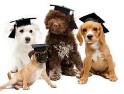 puppy preschool classes moffat beach veterinary surgery