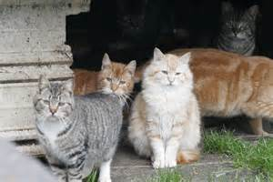 ferrel cat save feral cat colonies from forcechange