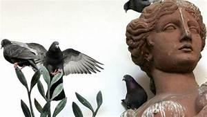 Wie Vertreibt Man Ratten : tauben wie wird man die fliegenden ratten los welt ~ Eleganceandgraceweddings.com Haus und Dekorationen