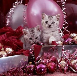 Silver kittens and pink Christmas decorations photo - WP08540