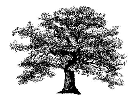 oak tree clipart black and white white oak tree clipart