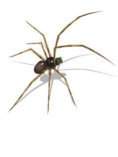 Spider Animated Wallpaper - spiders a d professional pest elimination ri ma ct