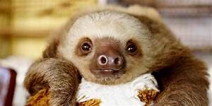 Cute Baby Sloths Tumblr | www.pixshark.com - Images ...