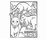 Coloring Wallaby Kangaroo Zoo Diego sketch template