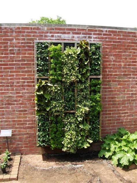 Vertical Garden Lettuce by Vertical Lettuce Herb Garden Garden
